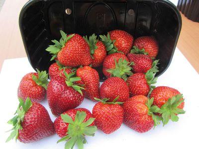 Amandine Erdbeerpflanzen