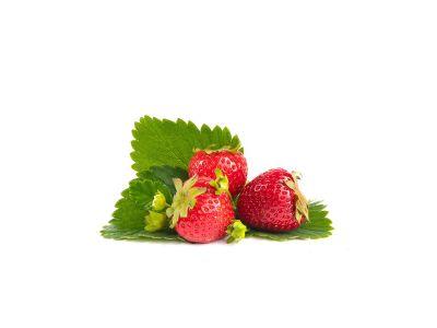 Daroyal Erdbeerpflanzen