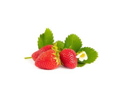 Furore Erdbeerpflanzen