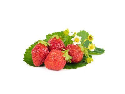 Korona Erdbeerpflanzen