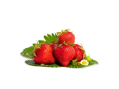 Lambada Erdbeerpflanzen