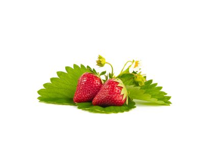 Malwina Erdbeerpflanzen