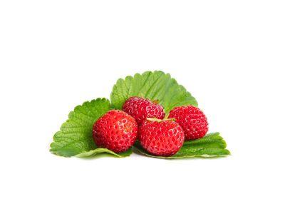 Mieze Schindler Erdbeerpflanzen