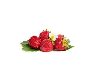 Senga Sengana Erdbeerpflanzen