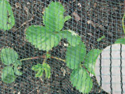 Vogelschutznetz für Erdbeeren, 2 x 10 m