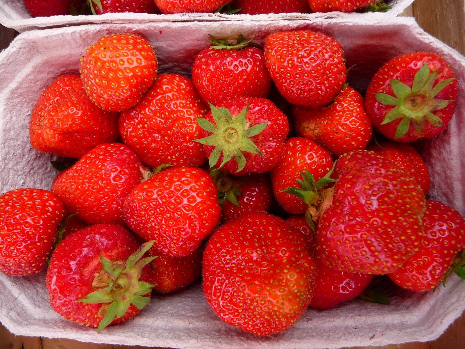Senga Sengana Erdbeerpflanze