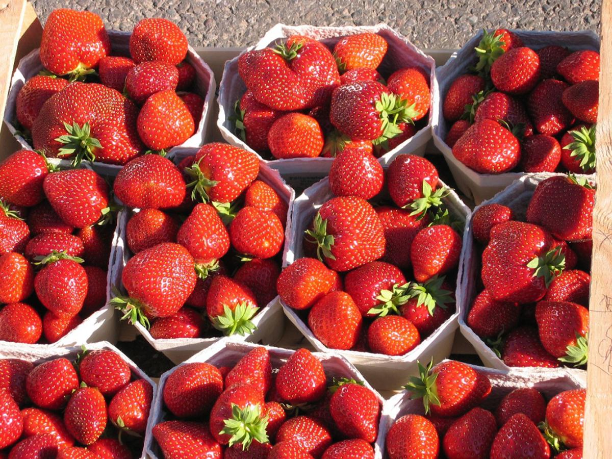 Früchte der Malwina Erdbeerpflanze von Erdbeerprofi.de