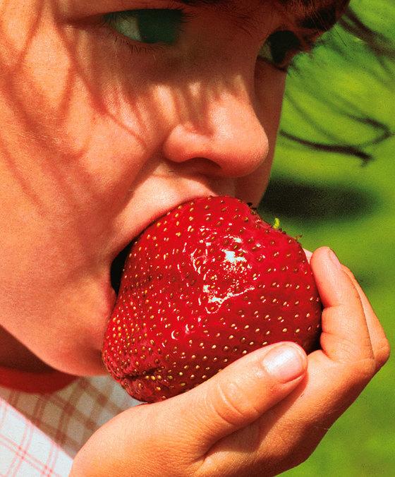 Maxim Riesen-Erdbeeren ernten mit Erdbeerpflanzen von Erdbeerprofi.de